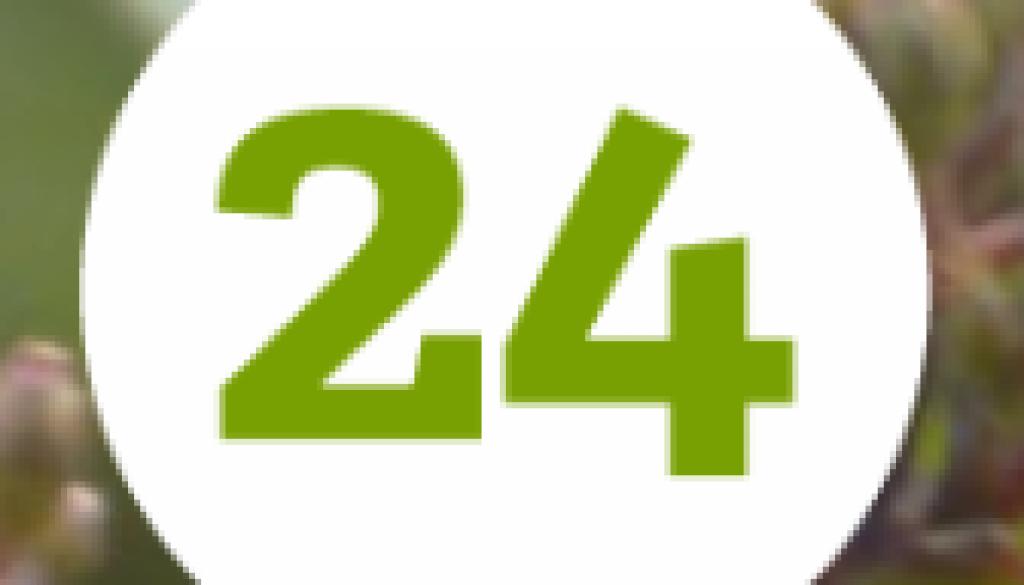 Heezeleende24