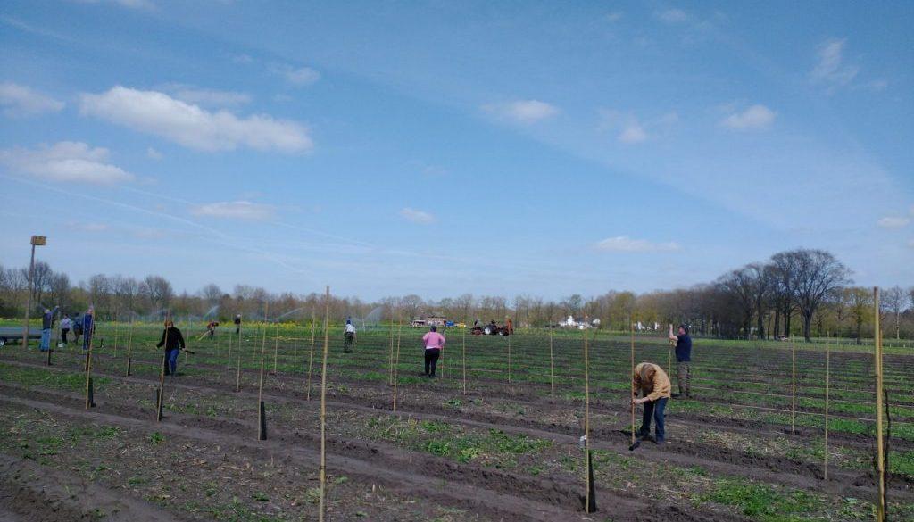 boomgaard eerste dag